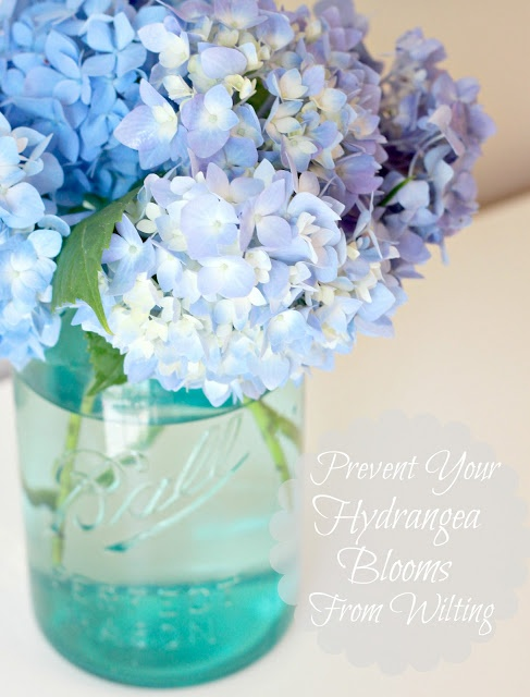 Tip to Keeping Cut Hydrangeas Looking Fresh....