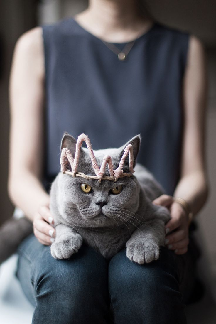 queen meow :D