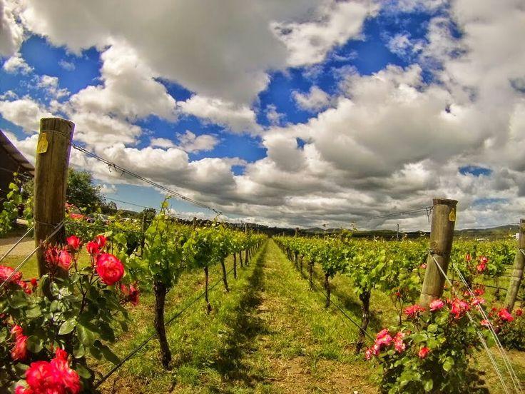 Vineyards Martinborough