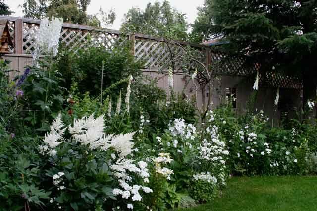 white flower garden   Lavender Garden Cottage: 15 Blooms for a White Garden