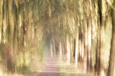A shower of autumn light - Limited Edition 1 of 4