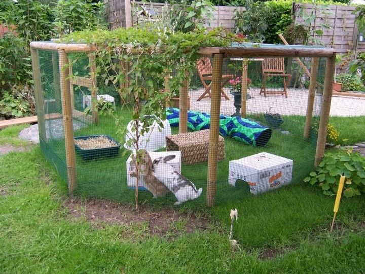 Gallery of recommended rabbit housing rabbit hutch for Outdoor rabbit enclosure ideas