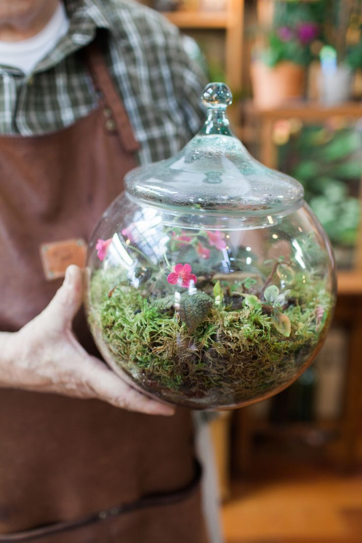 104 best Green Terrariums images on Pinterest | Garden, Garden plants and  Gardening