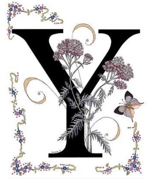 Belles Lettres Means Beautiful Letters