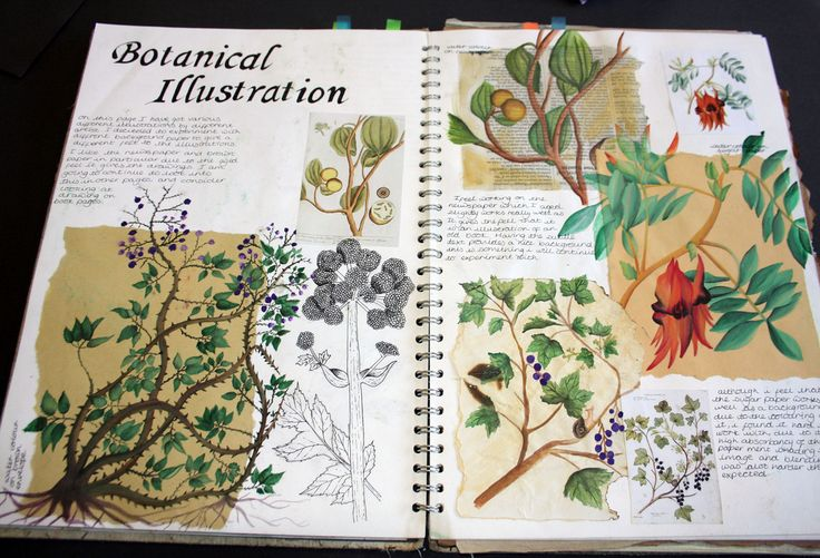 Sketchbook refrence work, a page looking into botanical illustration from over the years. I have used a cross section of media including watercolour and fineliner. Using different paper to work on has also been an essential part of these pages as I have experimented on working on sugar paper, newspaper and others. Dimensions: Double page spread in A3 sketchbook…