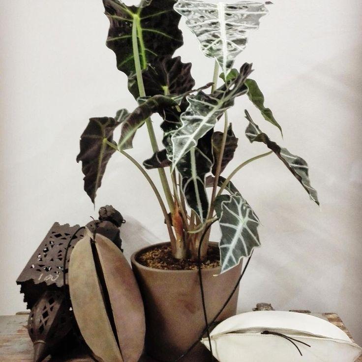 #addicted #bag #bags #madeinitaly #handmade #leather #leatherbag #italian #fumo #gallery #fashion #cool #handcraft #artist #cactyshop #store #artisan #Ferrara #cacti #event #bags #geometricabotanica #conceptstore #artgallery