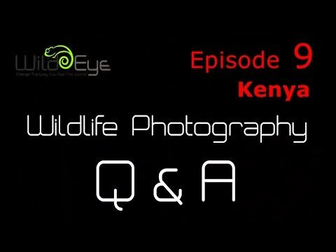 Wildlife Photography Q&A: Episode 9