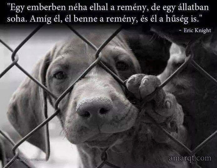 Eric Knight gondolata az állatok hűségéről. A kép forrása: Amarqt