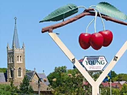 Young, NSW, The best cherry pies ever!