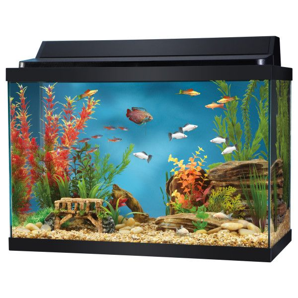 Top fin 20 gallon hooded aquarium aquariums petsmart for Fish tank top