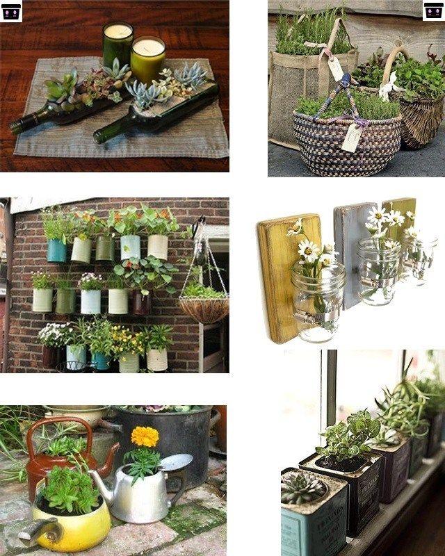 Pin By Darwin Manuel On Suculentas Plants Diy Home And Garden