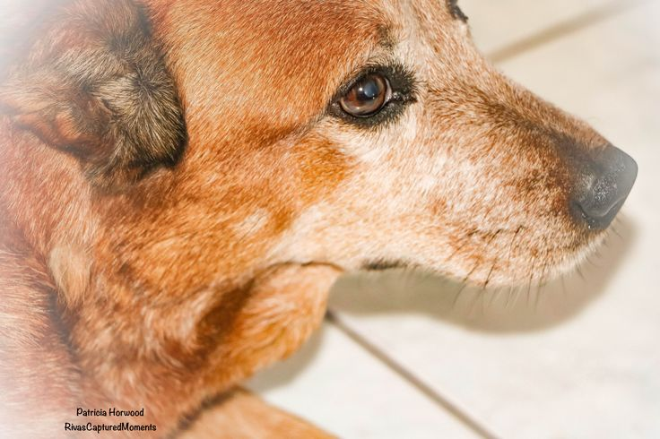 Cindy has such a placid nature she is also beautiful to capture! Pet Photography by Patricia Horwood