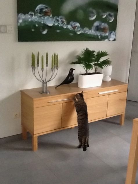 17 best Eames House Bird images on Pinterest | Eames, Charles ...