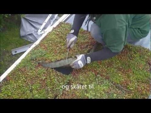 Med VegBlock i skole  Lille film om modulopbygget grønt tag