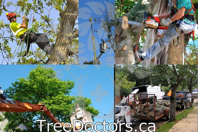 If you can't remember all of the services we offer, click here http://treedoctors.ca/... for a full list of them all. Or give us a quick Call (416) 201-8000 #treecare
