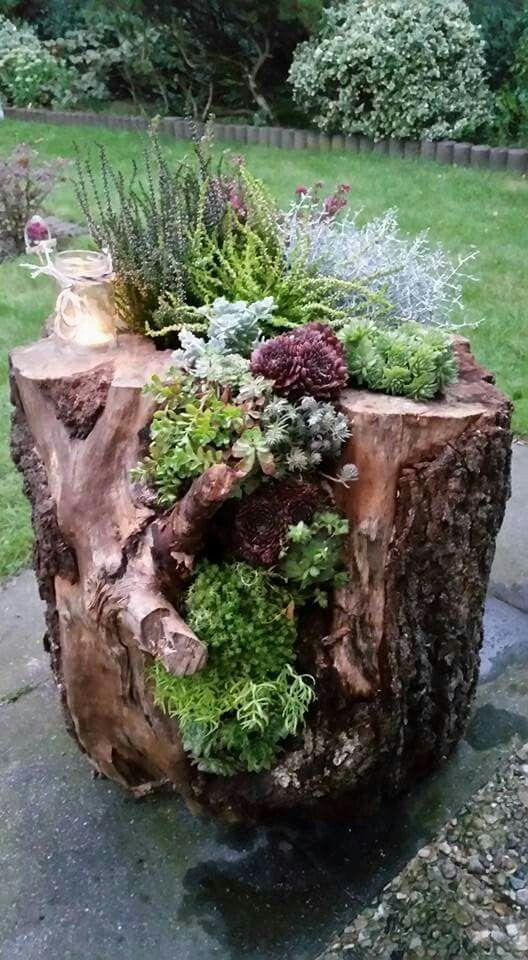 Decoration: houseleek grows in the tree trunk # Garden idea – #tree trunk #Dekoration – Bepflanzung