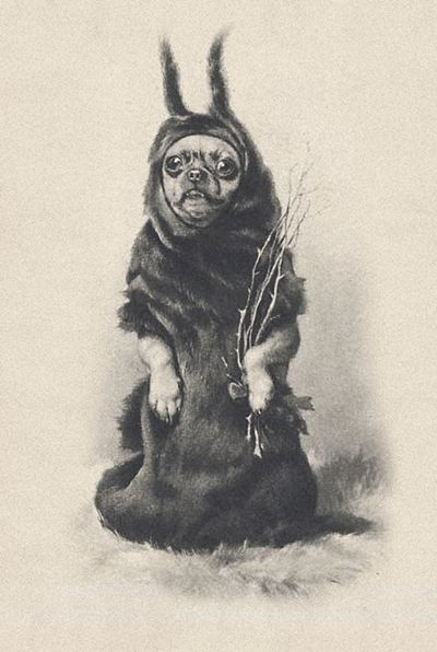 Chihuahua as Krampus (the anti-santa)