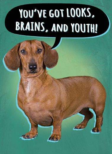"""Looks Brains Youth"" - 5x7 Vertical Folded Greeting Card or E-card. #giftcards #wishcards #dachshunds #birthdaycards #wishes"