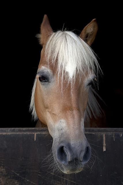 Il cavallo che passione! Nell'Oasi Zegna domenica 28 luglio una festa speciale per celebrare il #cavallo! Con divertimenti anche per i più piccoli! www.oasizegna.com