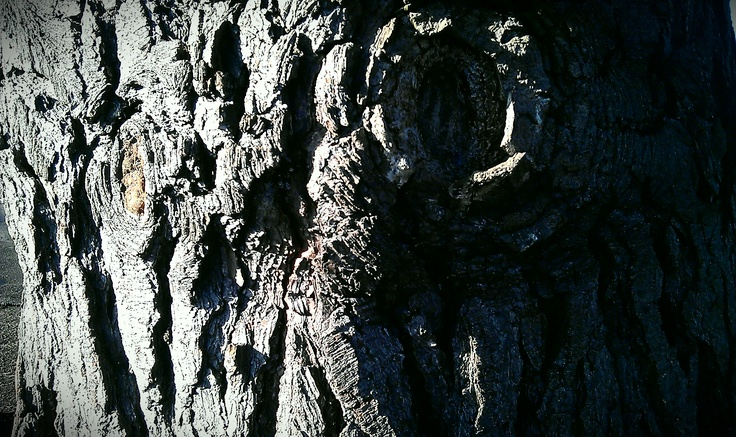 Close up details of tree bark in the special Enfield light.