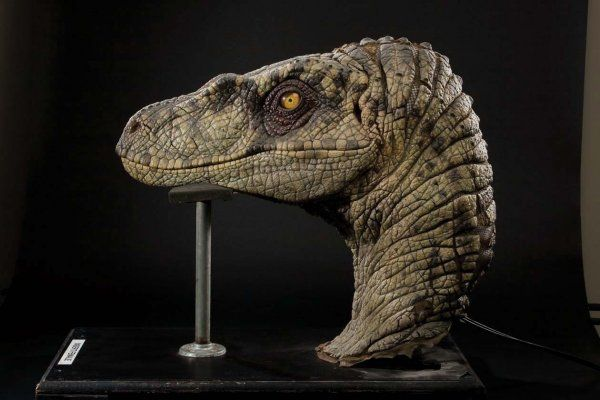 What Makes Up Indominus' Skull? | Discussions | Jurassic ... |Velociraptor Skull Front