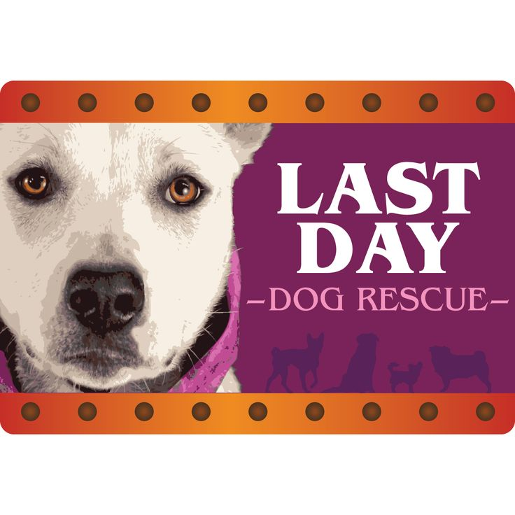 Last Day Dog Rescue is a group that we partner with. They're a wonderful organization that matches in need dogs with loving families.