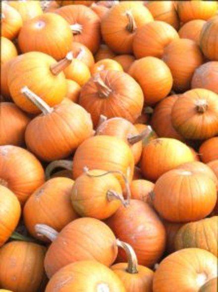 How to Grow Pumpkins | Garden Guides