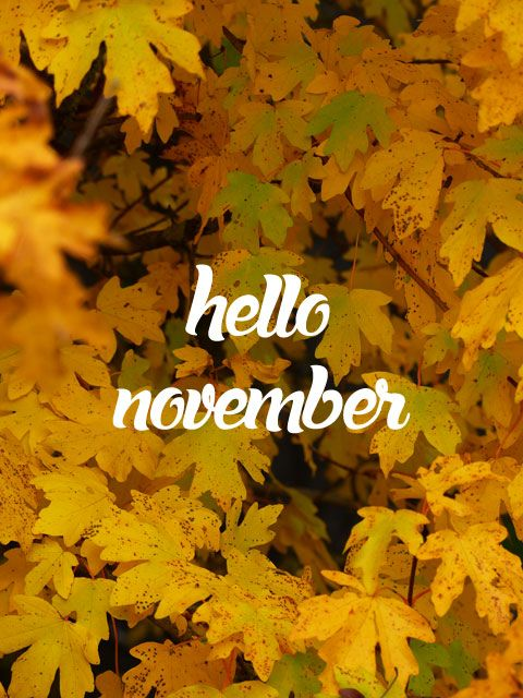 Autumn Leaf Fall Wallpaper Hello November 174 Www Image Gratuite Com Nature Hello