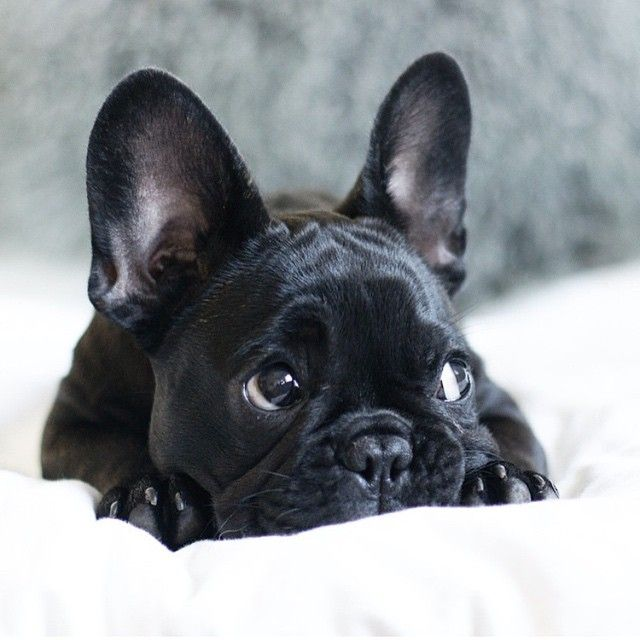 78 best Animals images on Pinterest