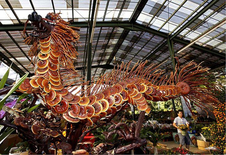 Kínai ganoderma sárkány! http://gombakiraly.hu