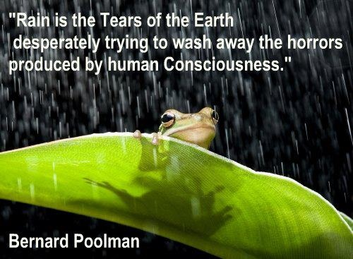 Rain is The Tears of the Earth  desperately trying to wash away the horrors  produced by human Consciousness.