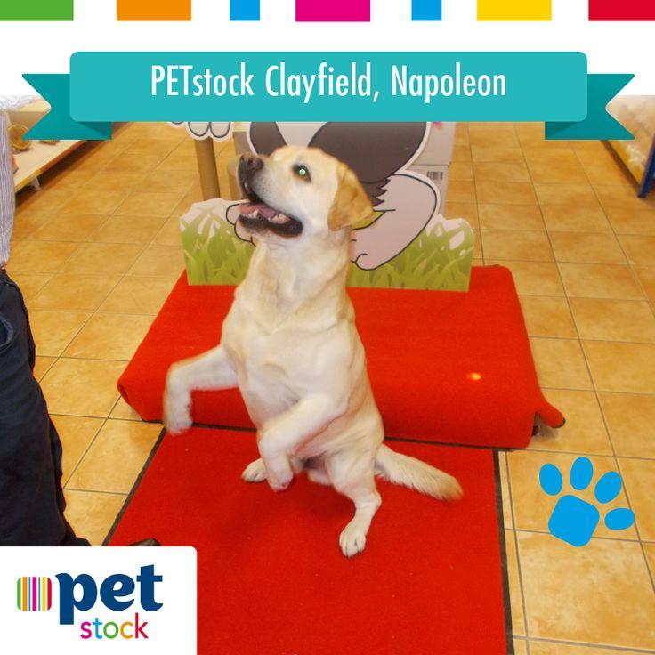 Napoleon the PETstock Clayfield winner