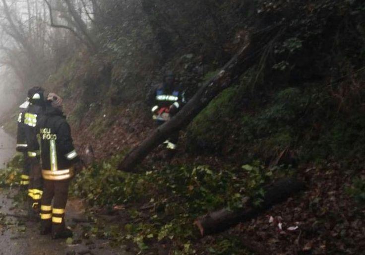Rocca di Papa, caduti 2 alberi per il maltempo abbattutosi sui Castelli Romani. Disagi al traffico