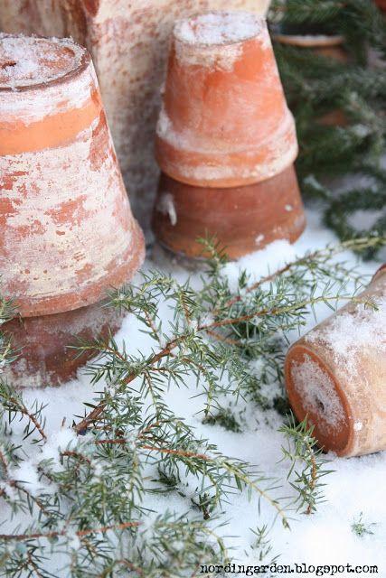 terracotta pots in winter | nordingården: Det vita, det vackra....