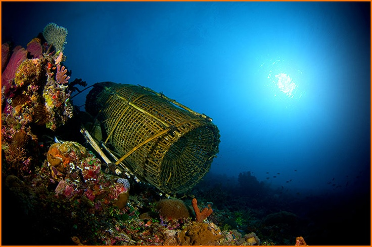 There isn't a reef at Alor (Indonesia) that isn't amazing.