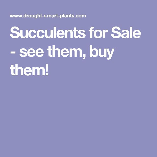 Succulents for Sale - see them, buy them!
