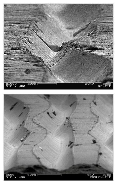318 Best Ideas About Things Under The Microscope On