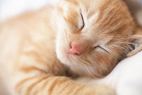 gato-dormindo