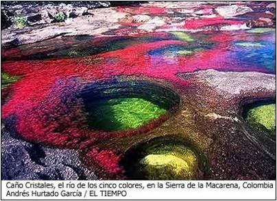 Cano Cristales, el rio de 5 colores, en la ierra de la macarena, Colombia