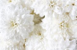 The Beauty of FlowersColors Trends, White Flower, Wedding White, Flower Power, White Peonies, Flower Children, Blue Flower, White Wedding Flower, Floral