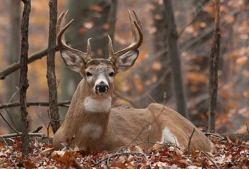 55 Best Images About A Man S Passion On Pinterest Deer