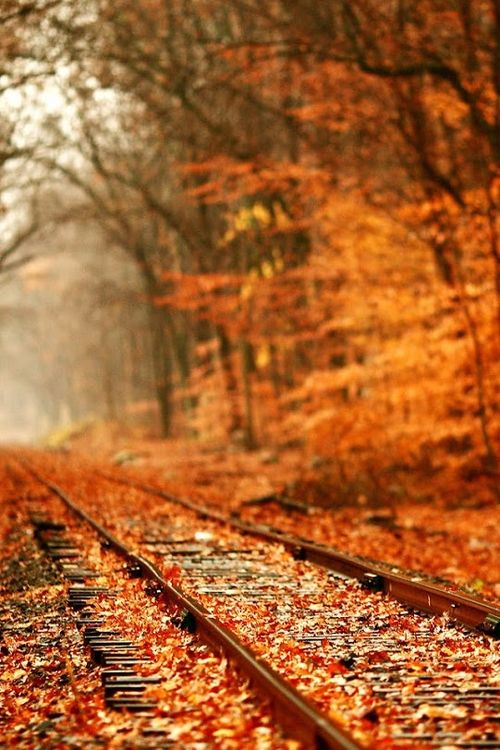 I've walked track similar to these before. There's a solitude to walking the tracks. Not to many people venture down them, so you can be alone and enjoy the quiet.