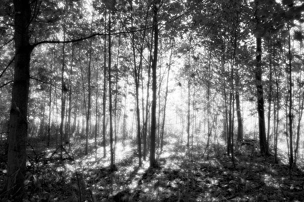 Dappled sunlight filters through a dense forest in Bronte Creek, Ontario