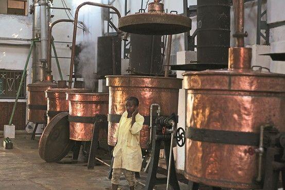 Destilación de RAVINSTARA