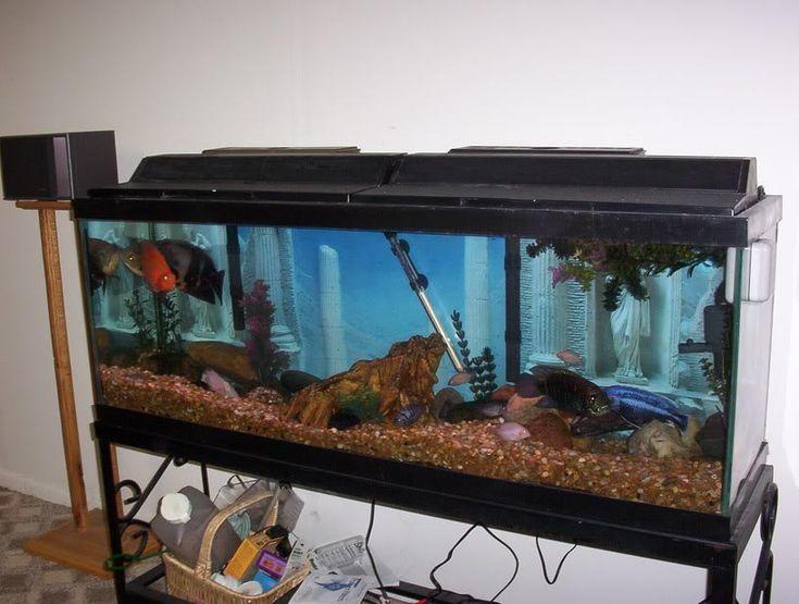 1000 ideas about 100 gallon aquarium on pinterest 300 for 100 gallon fish tanks