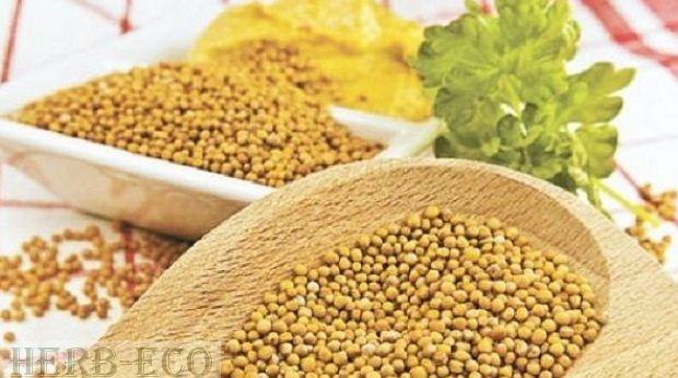 Горчичное семя-польза и рецепты