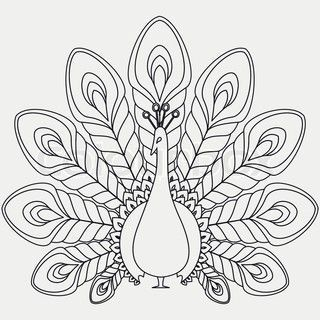 Peacock Line Drawing | Vector of 'Peacock on a tree branch full of flowers of hibiscus Black ...: