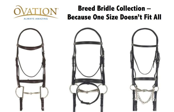 New for spring! Ovation Riding Breed Bridle Collection. This Collection features carefully selected bridles that are appropriately sized and styled for Arabian, Quarter Horse, Draft Cross and Friesian's. Available options: Raised and Fancy Stitched Hunter Bridles, Traditional Flash, Crank Flash and Double Dressage Bridles. All models are crafted from hand finished full grain vegetable tanned leather with a lustrous classic finish. #bridle #ovationnation