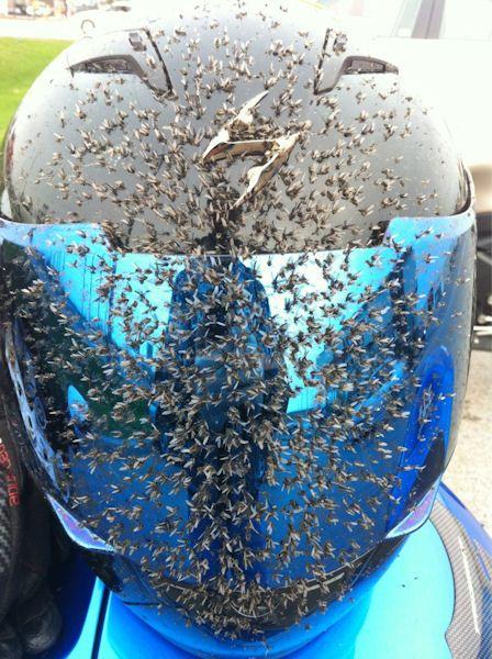 insolite casque moto moustique
