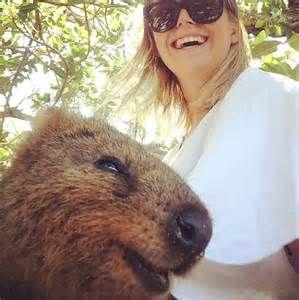 Quokka Animal Taking Selfies - Bing images